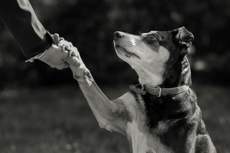 cane sporge la zampa alla padrona