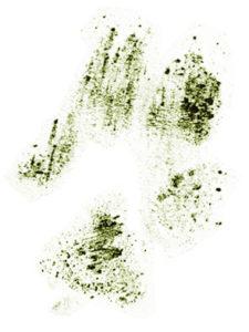impronta zampa cane